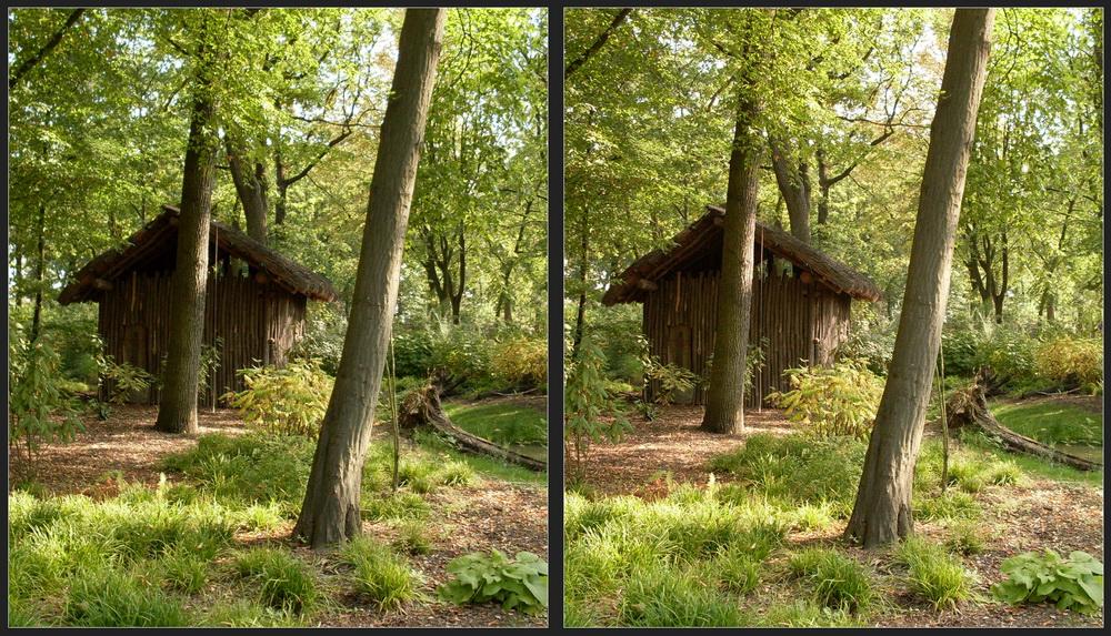 Regenwald 3D II