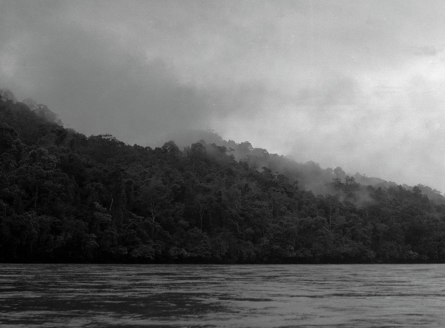 Regenwald in Borneo 1984
