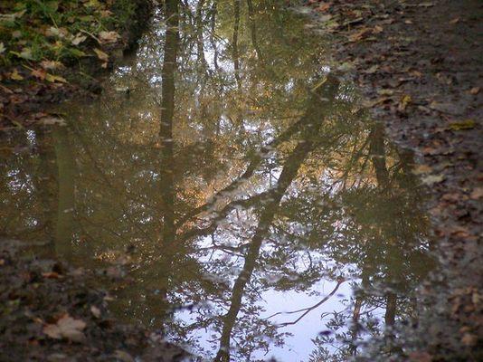 Regenwald in einer Pfütze