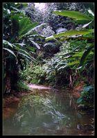 Regenwald, Thailand