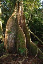 Regenwald Tortuguero