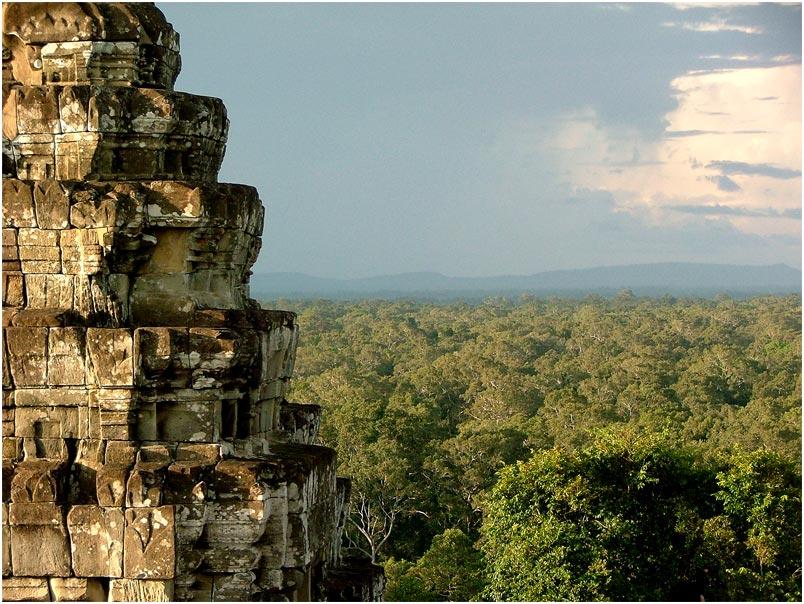Regenwald vom Tempel Phnom Bakheng