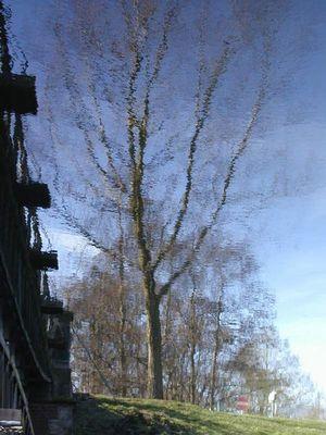 Regenwaldbaum im Großen Garten