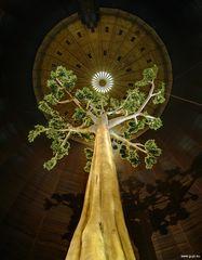 Regenwaldbaum in der Dose