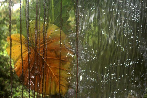 Regenwaldfeeling