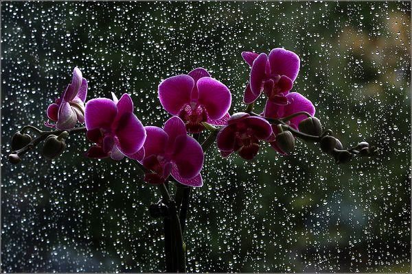 Regenwetter . . . 2
