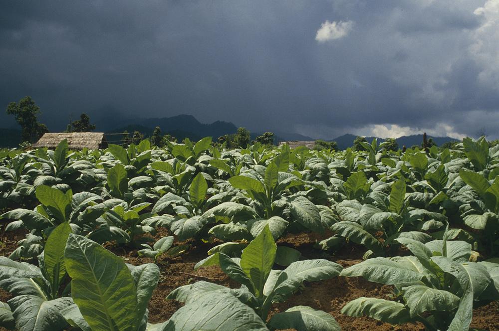 Regenzeit in Nordthailand