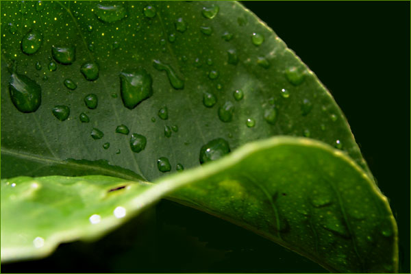 Regenzeugen in der Sonne...