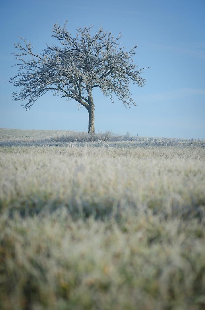 """""""Reif"""" für den Winter"""