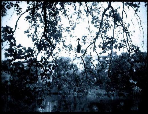 Reiher am Lietzensee