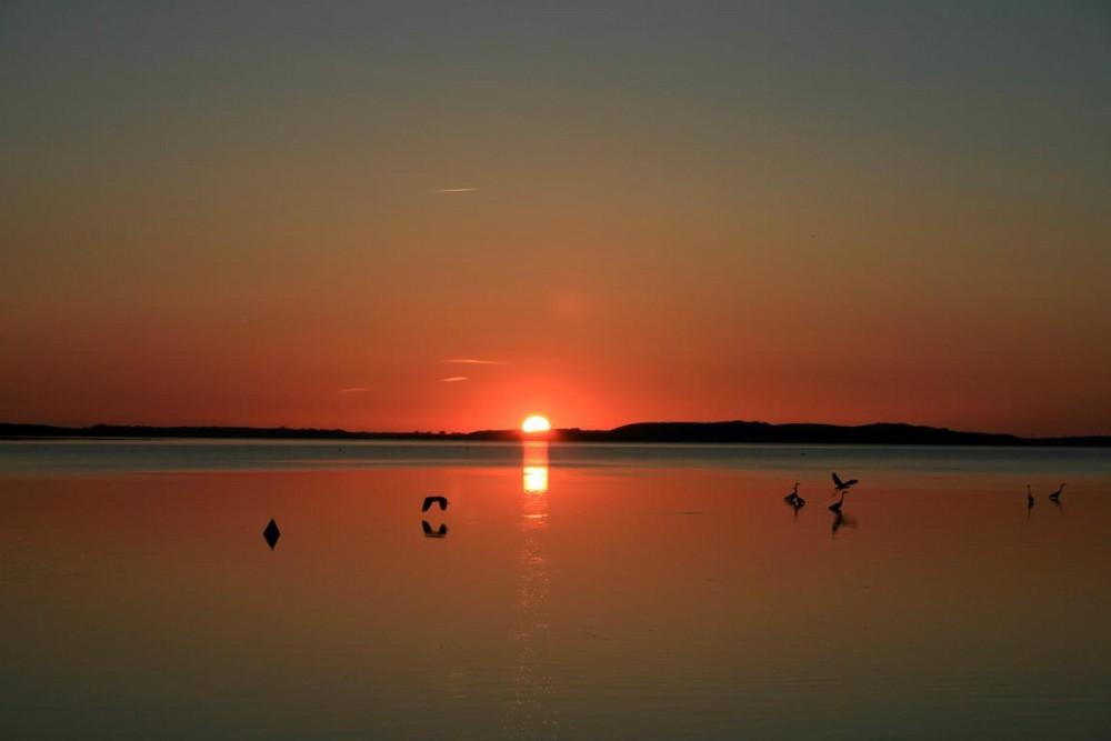 Reiher im Sonnenuntergang 2
