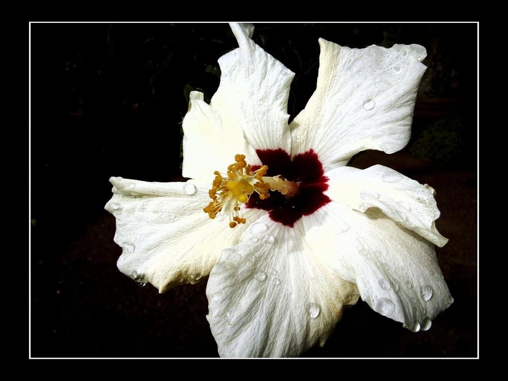 Reines Weiß