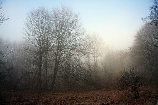 Reinhardswald im Nebel