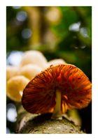reino fungi 2