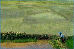 Reis und harte Handwerksarbeit in Madagaskar.