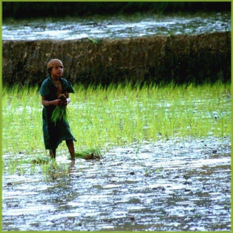 Reisarbeit