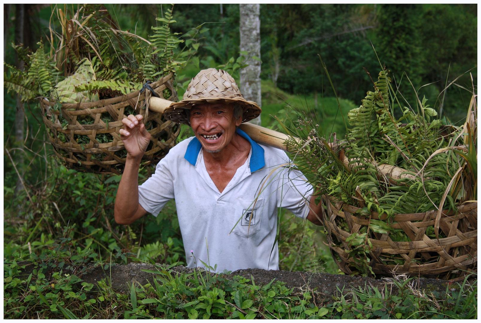 Reisbauer auf Bali