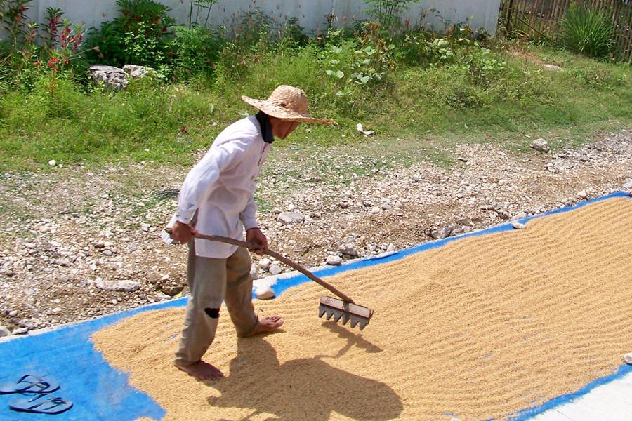 Reisbauer auf Bohol (Philippinen)