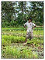 Reisbauer - Kampot, Kambodscha