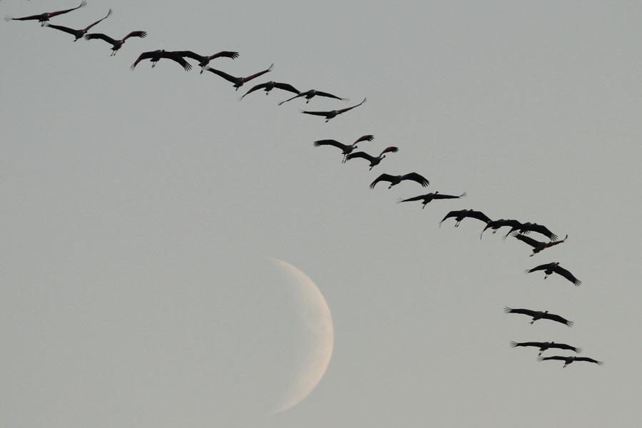 Reise zum Mond 1
