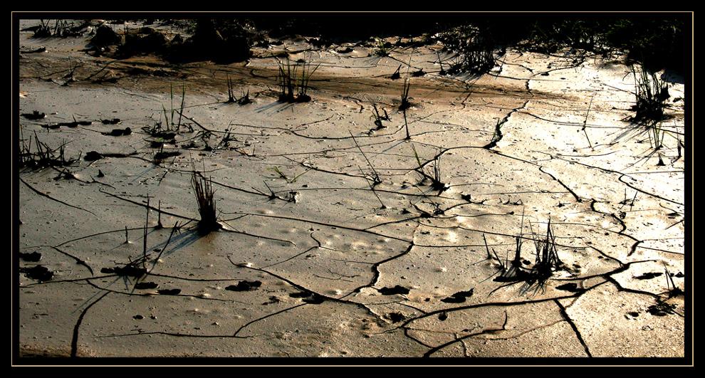 Reisfeld im Gegenlicht