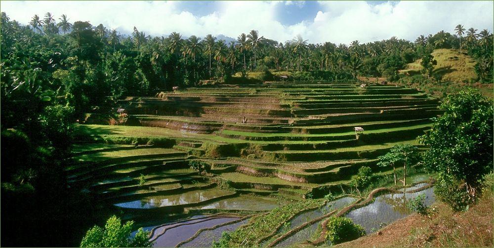 Reisfelder...