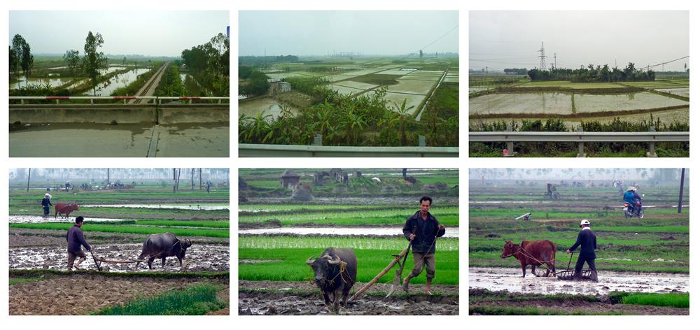 Reisfelder in Vietnam bei Hanoi