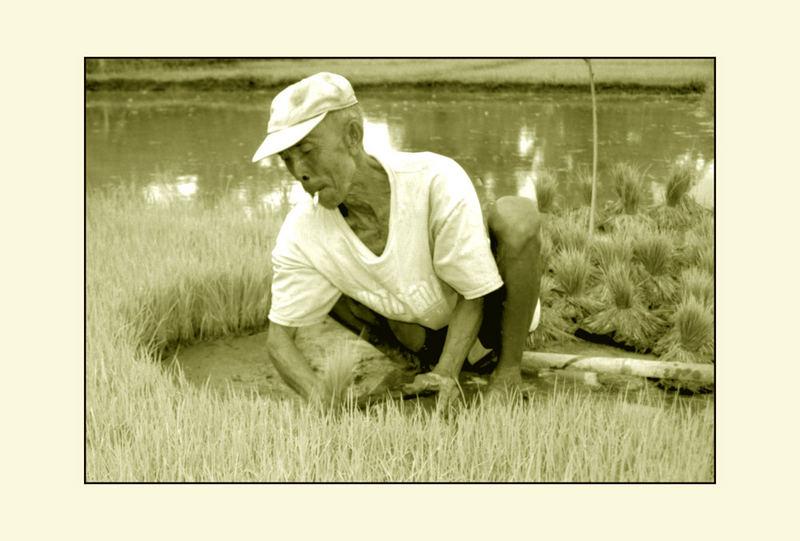 Reispflanzer