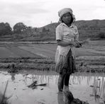 Reispflanzerin - Sumatra