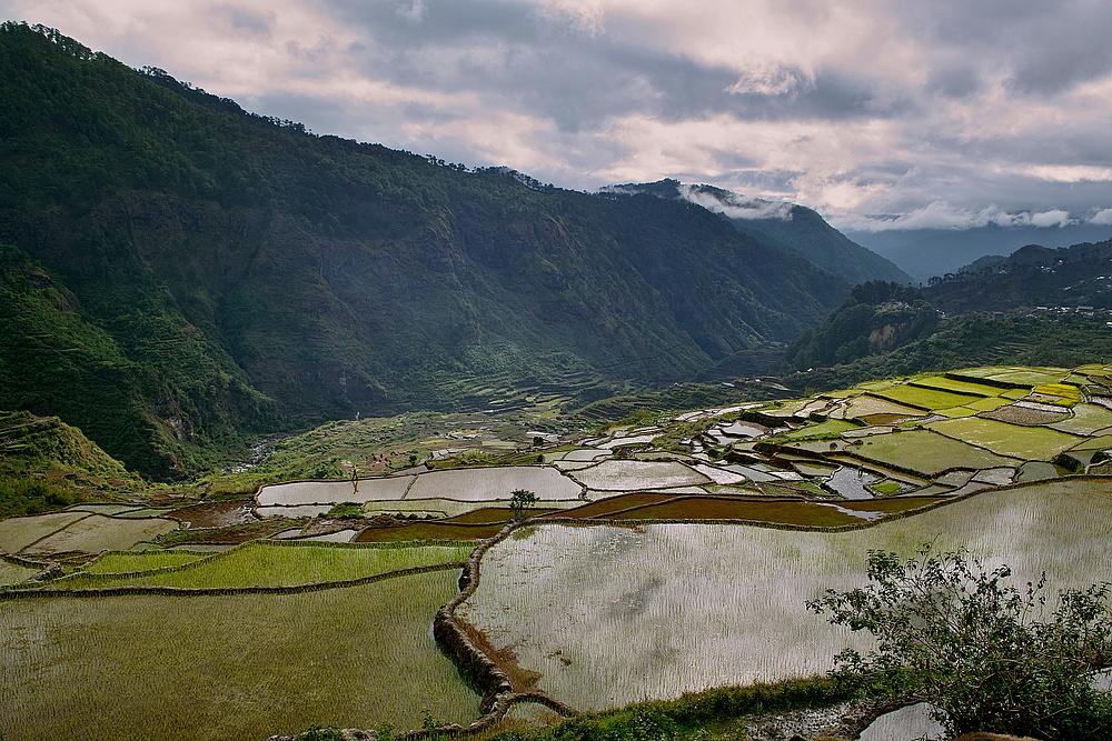 Reisterassen bei Sagada -Philippinen