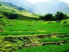 Reisterrasse entlang des Weges