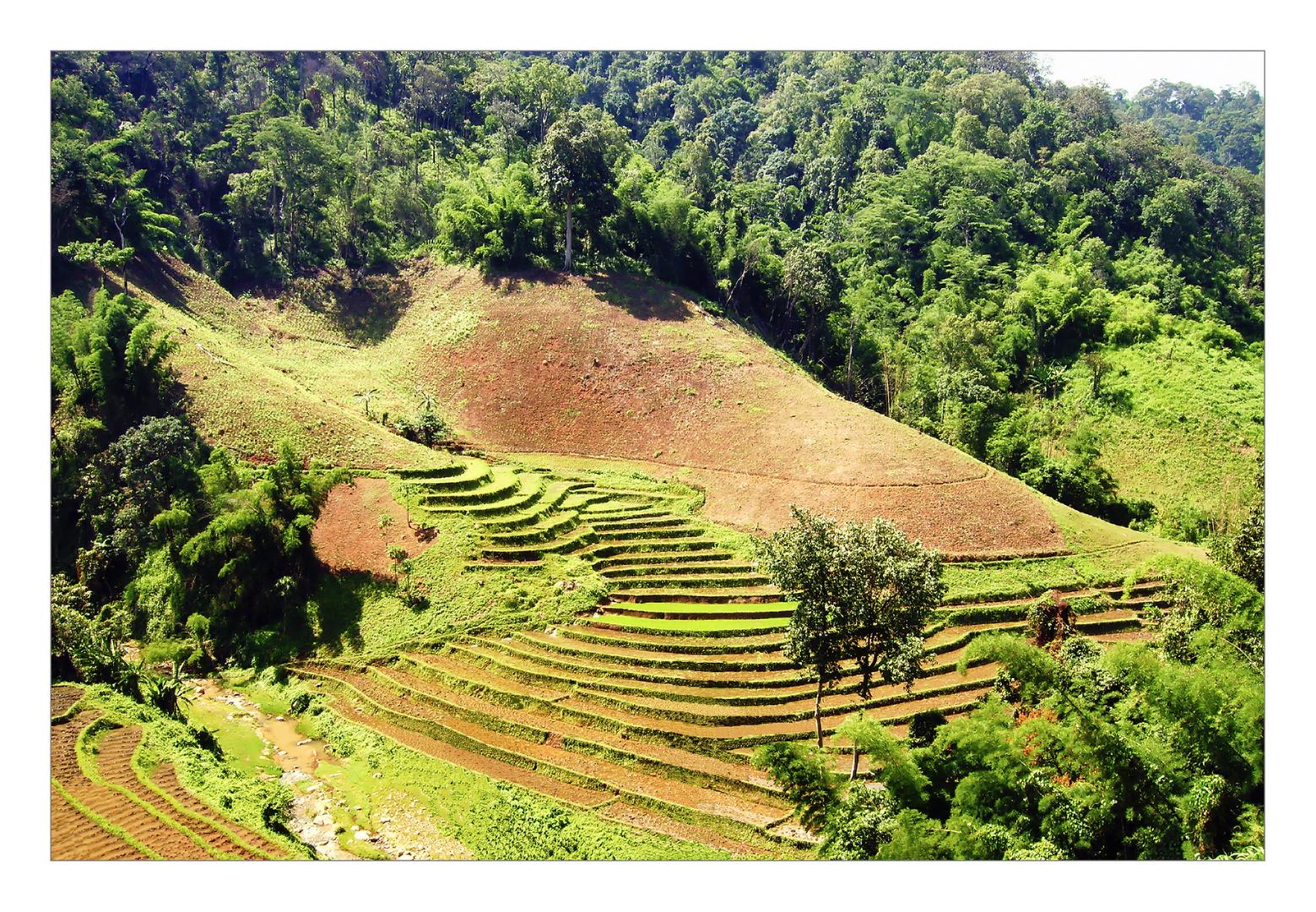 Reisterrassen - Thailand