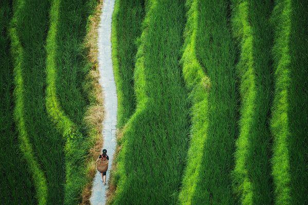 Reisterrassen von Longsheng