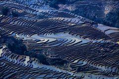 Reisterrassen zur blauen Stunde