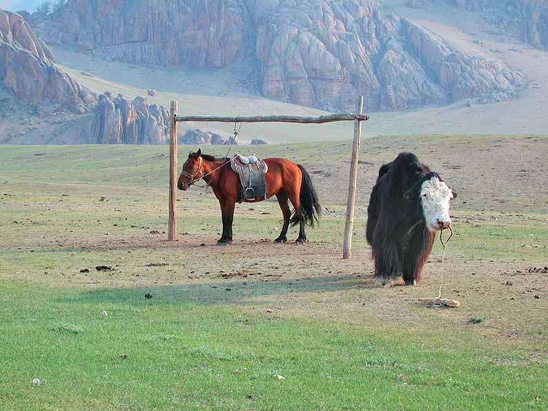 Reit- und Zugtiere der Nomaden