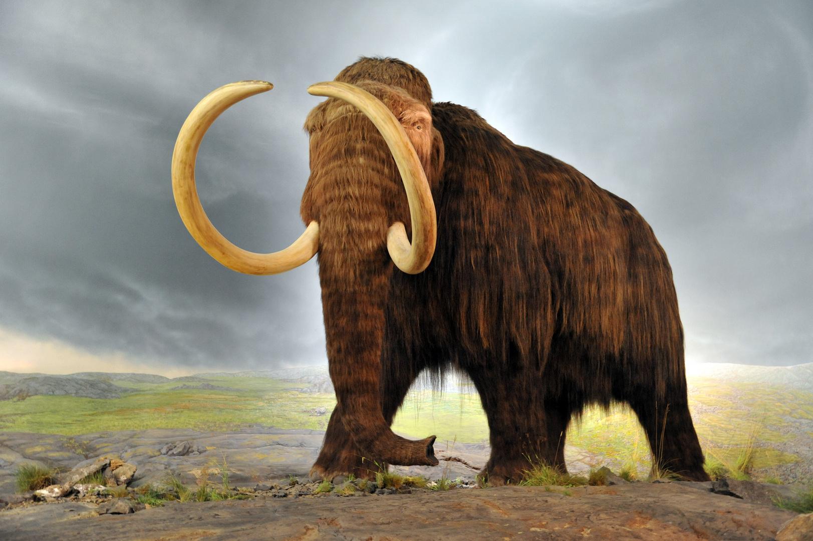 Rekonstruktion eines Mammuts