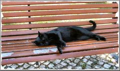 Relax al giardino....per  Luigi (Gigi) Tarasca