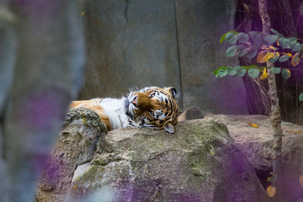 relaxen im leipziger zoo
