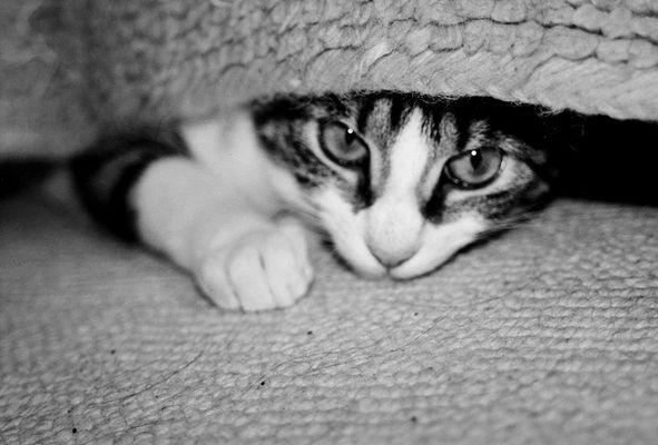 Relaxen unterm Teppich
