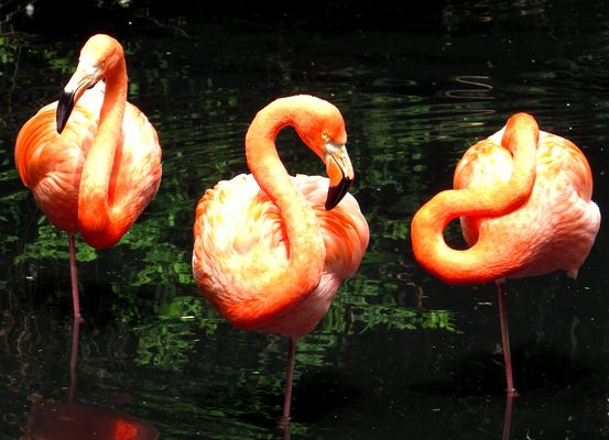 Relaxing Flamingo Trio