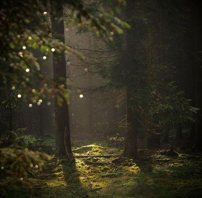 Relaxing Lights # Juli-Edition