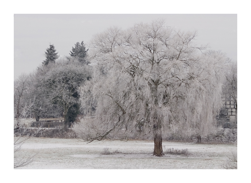 - ReLoad Winter ´09 -