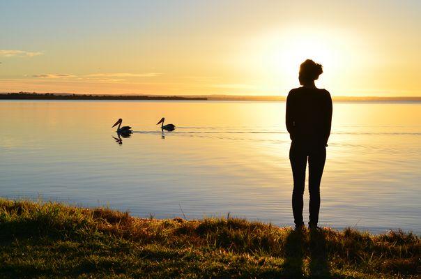 Rencontre avec la nature au petit matin
