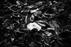 Rencontre avec le champignon