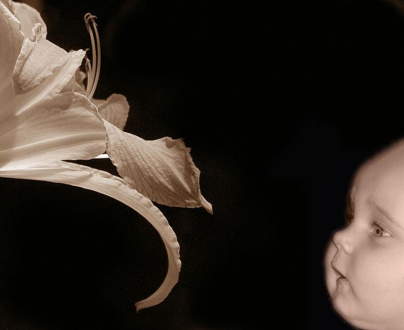 rencontre de deux fleurs