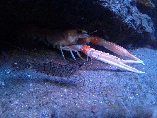 rencontre sous la mer