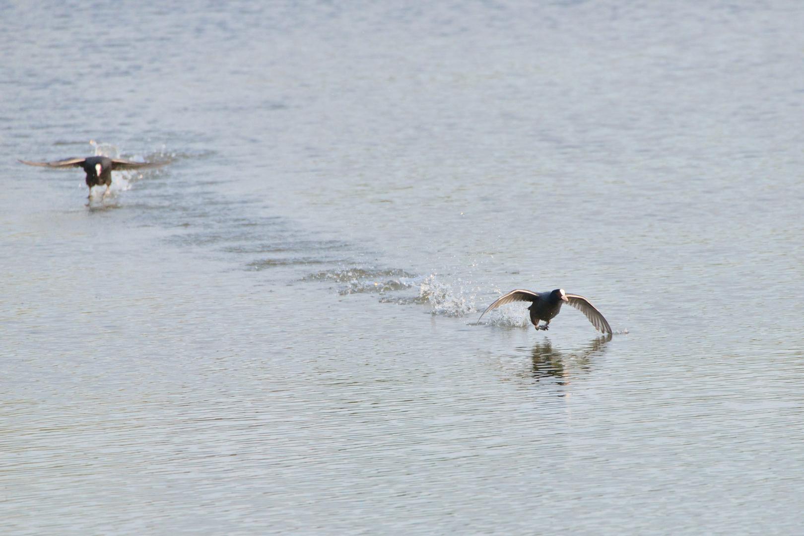 Rennen auf dem Wasser