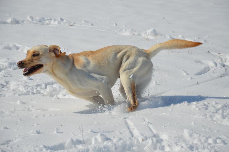 Rennen im Schnee