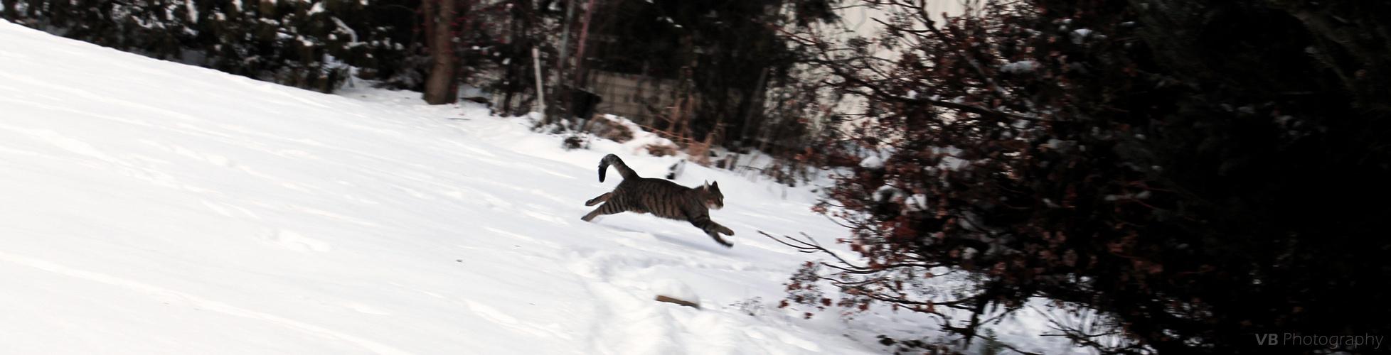 Rennende Katze