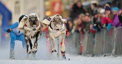 Rentierrennen
